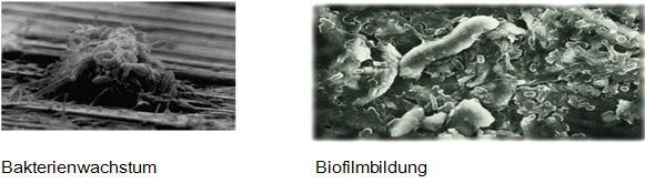 bakterien-biofilm-beispiel